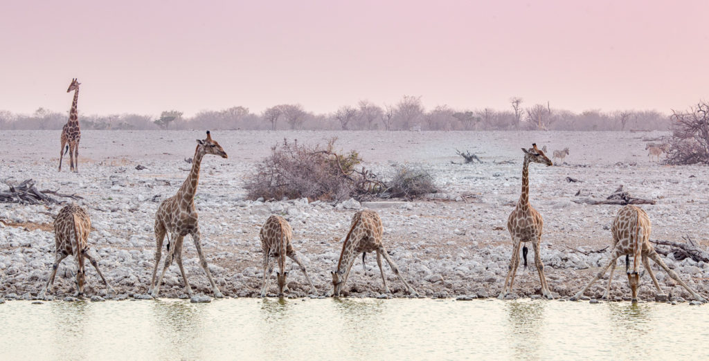 Namibia – A Photographer's Dream Destination