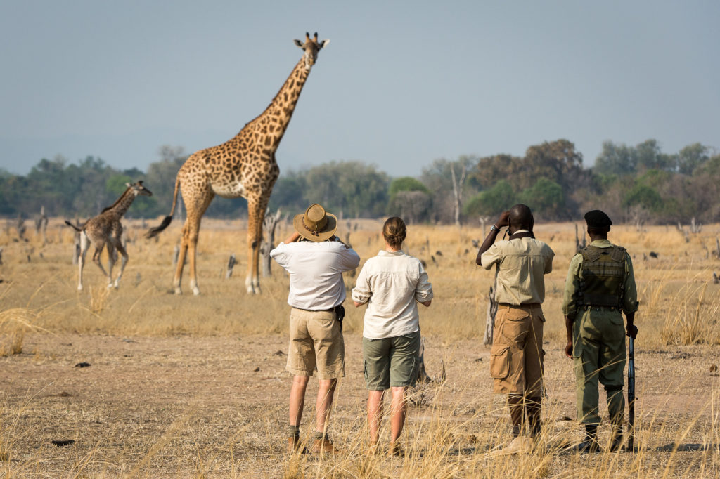 Get up close to wildlife on a walking safari in South Luagwa