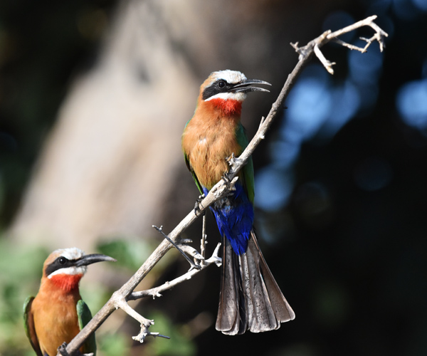 The Best Camera To Take on Safari