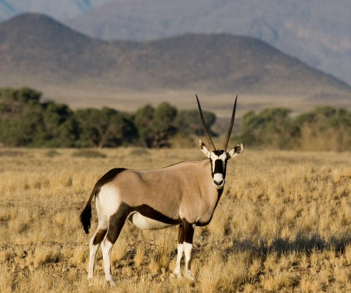 Dreamy Desert Safari Destinations