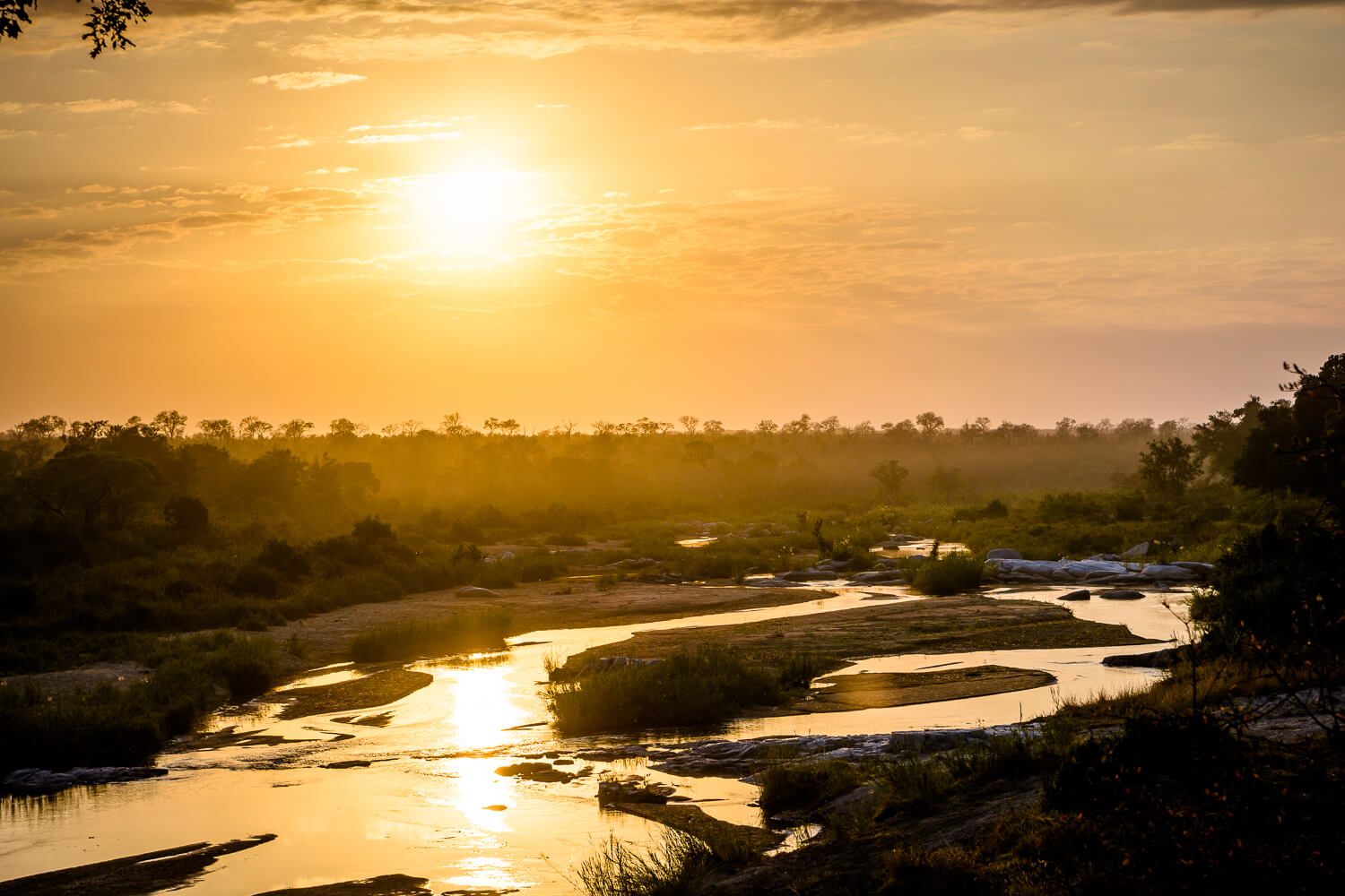 A guide to night game drives on an African safari