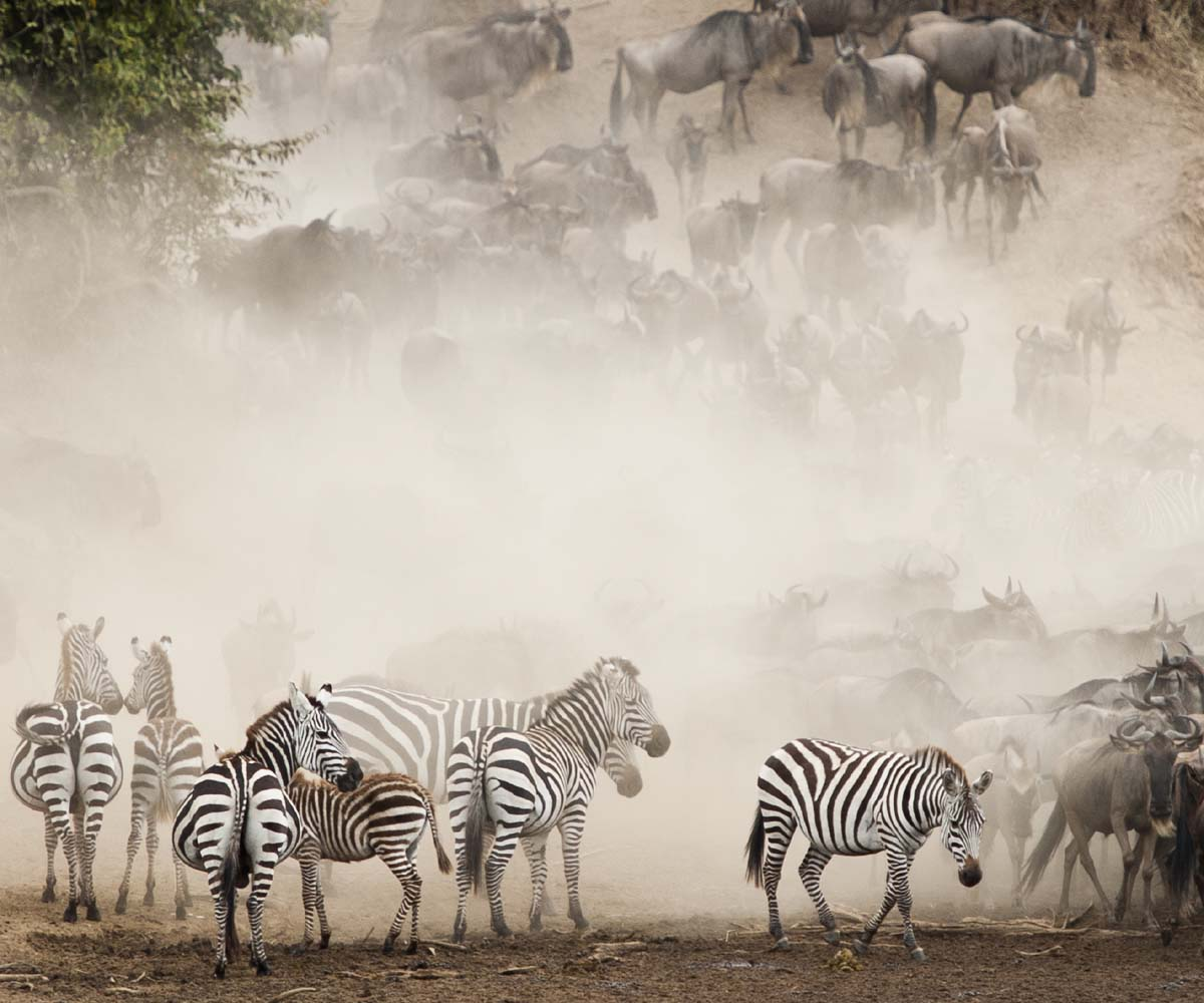 3 of the Best (Ethical) Animal Encounters in Africa