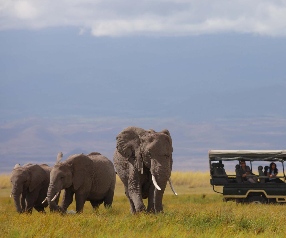 Best Christmas Destinations in Africa: Festive Season on Safari