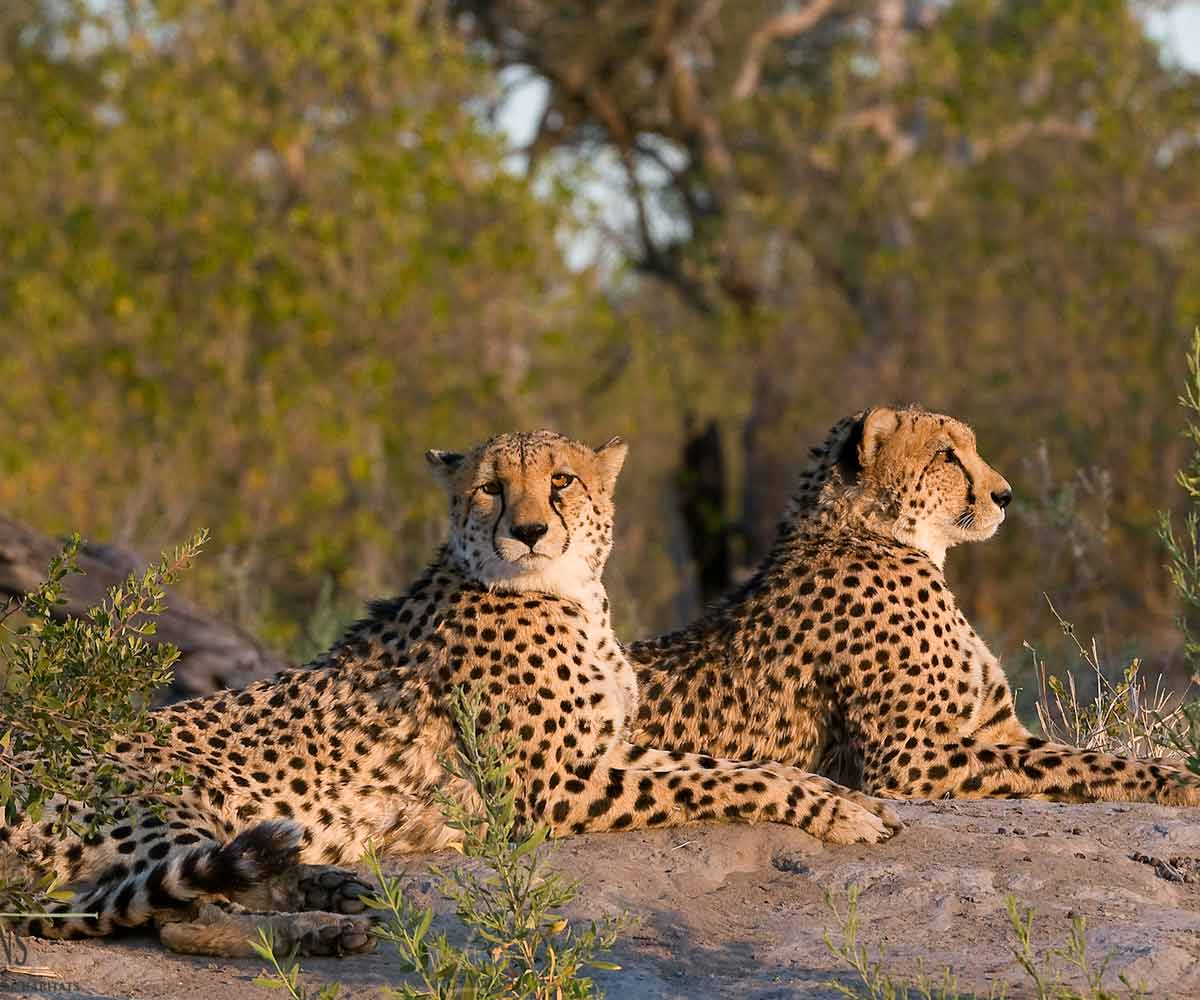 Safari Honeymoons in Southern Africa
