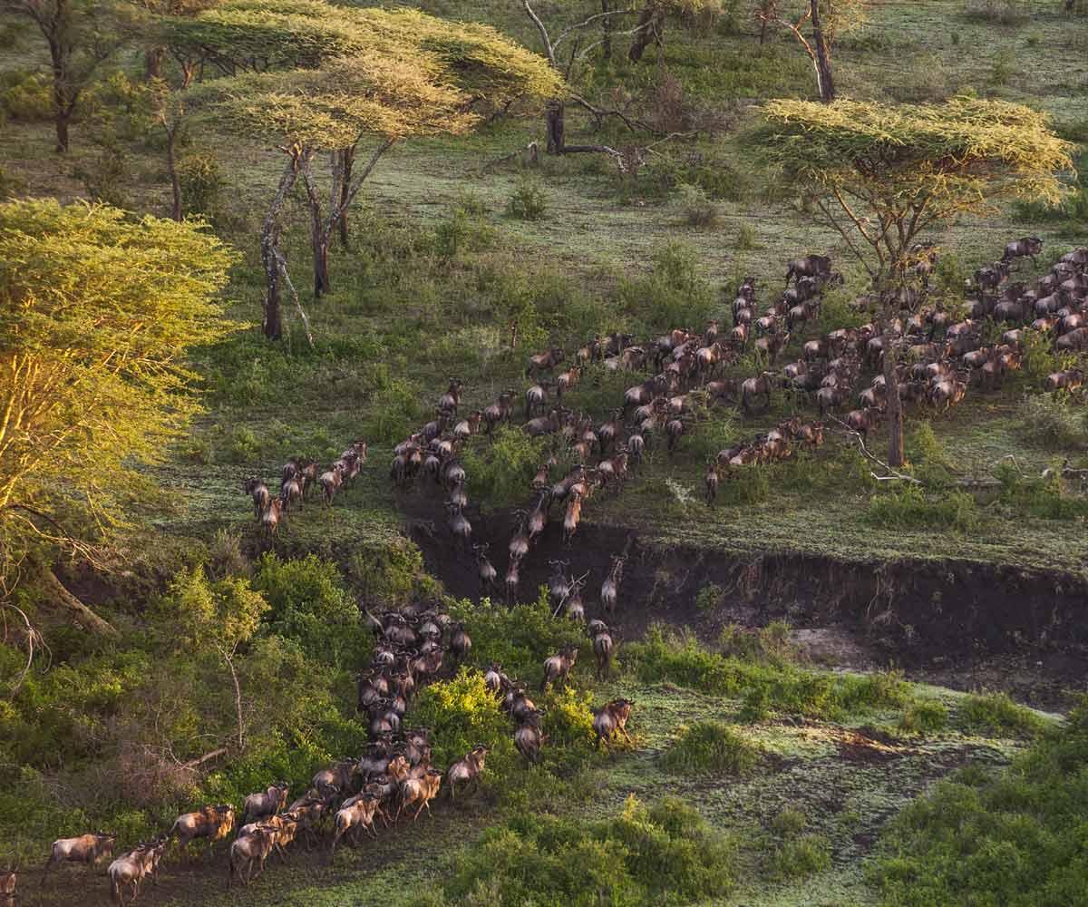 Serengeti Wildebeest Migration Secrets
