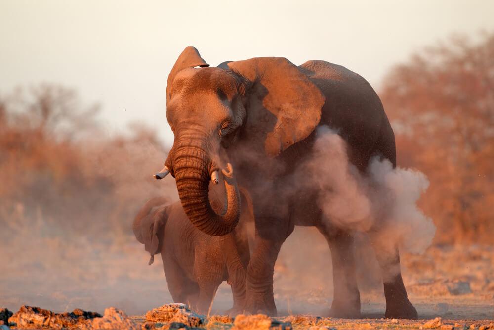 Tips for Spotting Wildlife on a Self Drive Safari