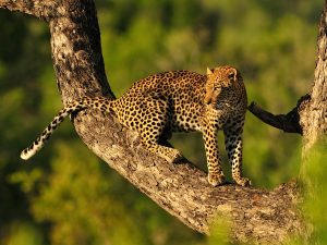 Tanzania voted best safari country in Africa